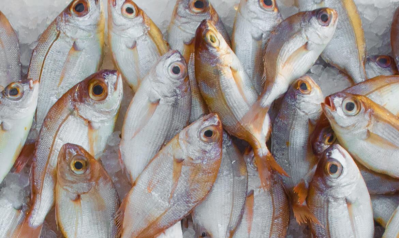 Los productos pesqueros que se exportan desde Panamá
