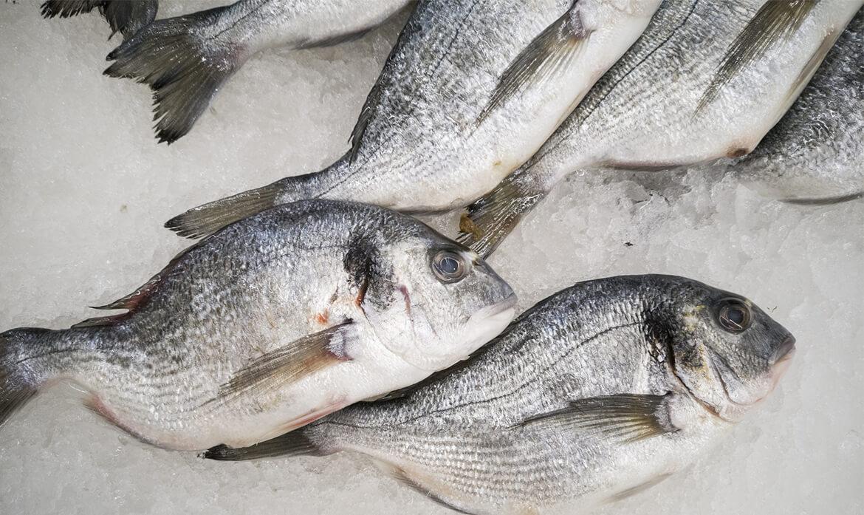 Productos del mar congelados en Panama